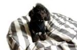 The Dog ワンちゃんと一緒にくつろぐビッグソファークッション ストライプ柄 Φ100cm