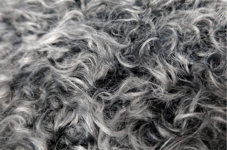 kanlganlamb-gray