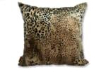 spain-leopard-50
